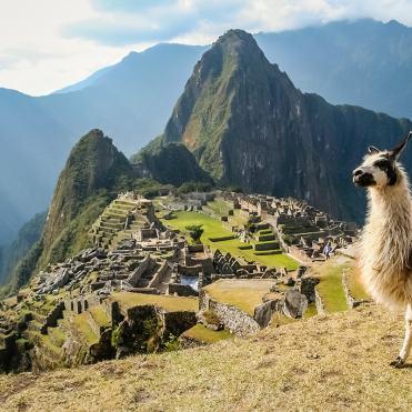Machu-Picchu-te llama